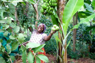 agriculture biodynamique biodynamie en Afrique