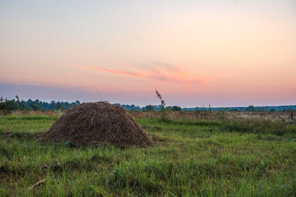 biodynamie prairie champs étude scientifique agriculture biodynamique bio écologie brouillard pesticides biodiversité