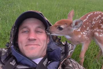 darius et le bébé cerf