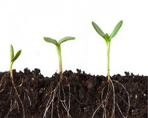 roots-plants