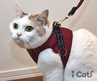 カテゴリページ(猫用ベスト型ハーネス)