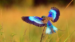 Contact   Birding Safaris