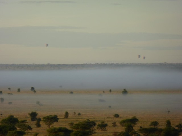 foggy serengeti