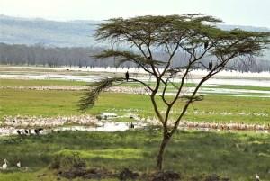 flamingos kenya february 2020