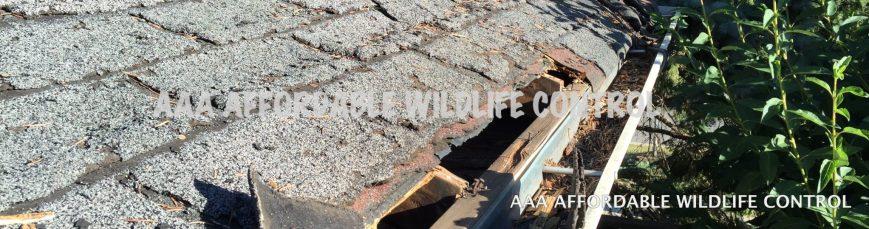 WILDLIFE CONTROL TORONTO - AAA Affordable Wildlife Control