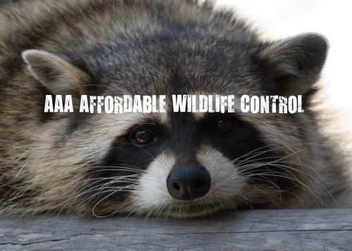 Wildlife Control Toronto - Raccoon Removal Toronto