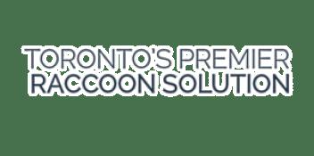 Squirrel Removal, Raccoon Removal, Squirrel Removal Toronto, Raccoon Removal Toronto, Skunk Removal Toronto