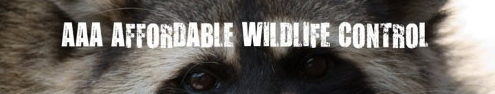 Wildlife-Control-Toronto-Affordable-Wildlife-Control
