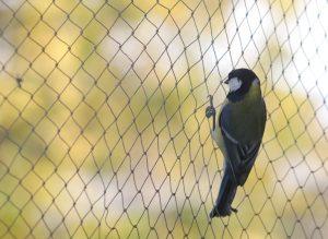 bird removal toronto - bird netting