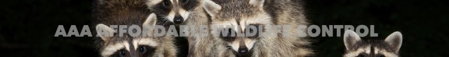 AAA Affordable Wildlife Control Reviews - Raccoon Removal Scarborough, Wildlife Removal Scarborough, AAA Affordable Wildlife Control