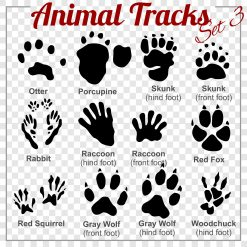ANIMAL TRACKS - AAA Affordable Wildlife Control