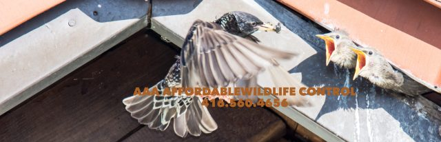 Wildlife Control Toronto, AAA Affordable Wildlife Removal, Animal Removal Toronto, Affordable Pest Control