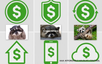 Raccoon Removal Cost