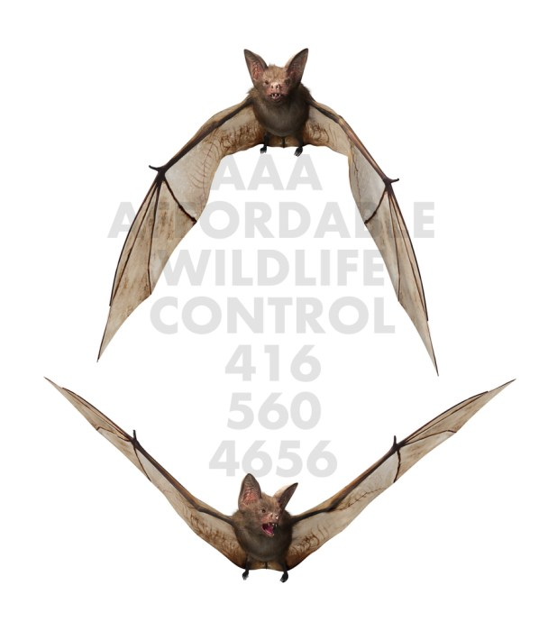 BAT REMOVAL TORONTO - AFFORDABLE WILDLIFE CONTROL