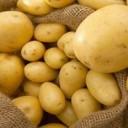 تسويق وتخزين البطاطس