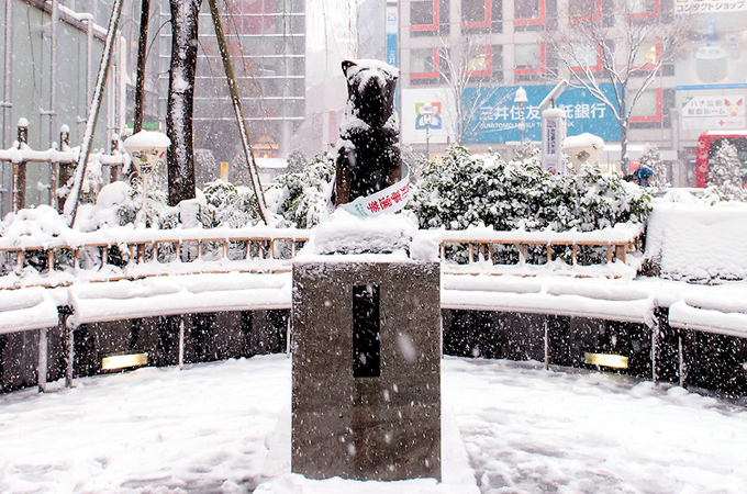 hachiko covered in snow