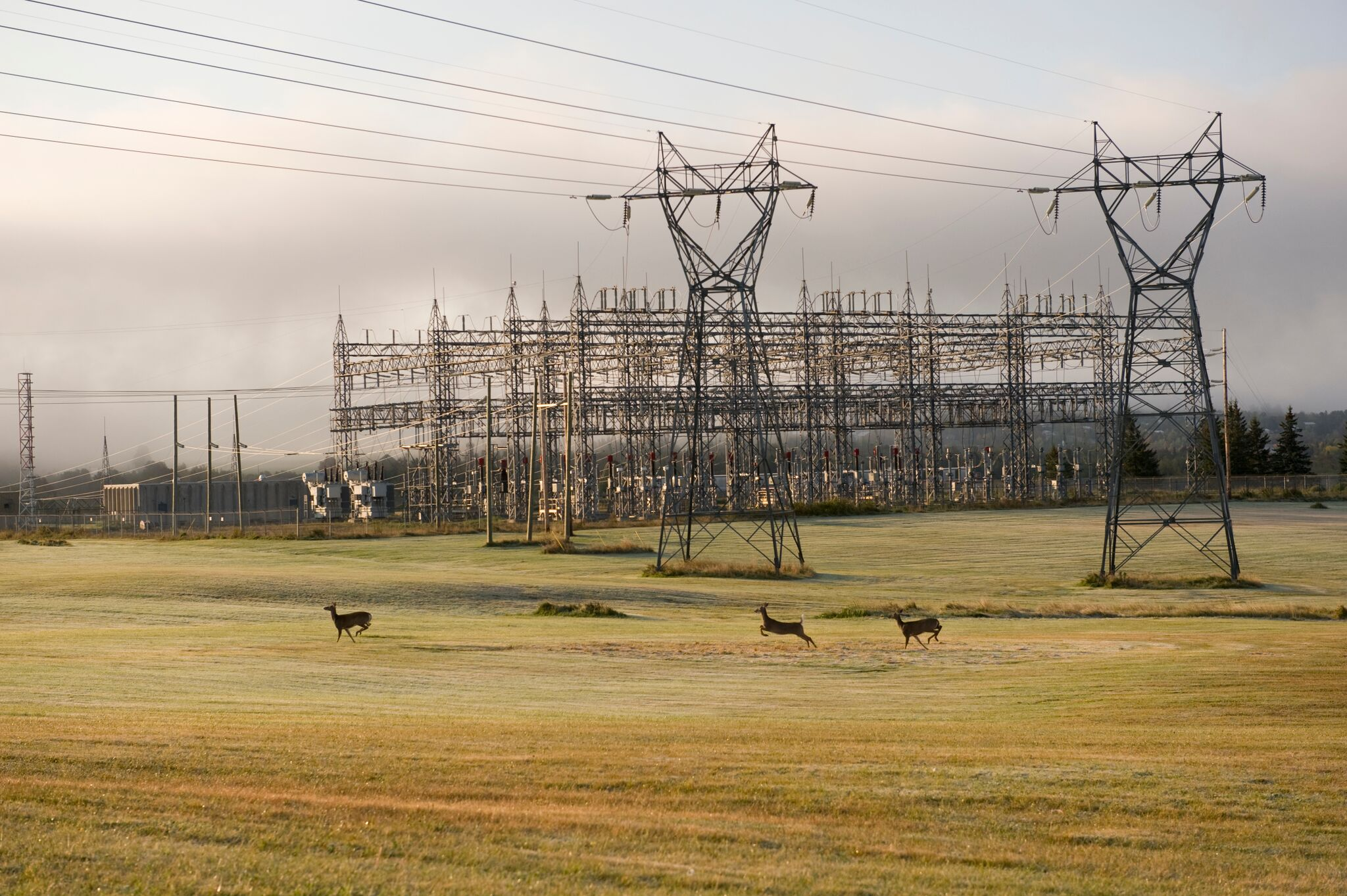 power lines and deer