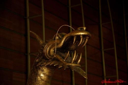 DSC_6864 testa di drago - afnews