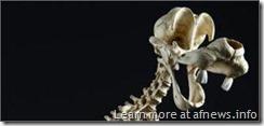 PippoScheletro su http://www.jamesgunn.com/2010/06/15/skeletons-of-cartoon-characters/