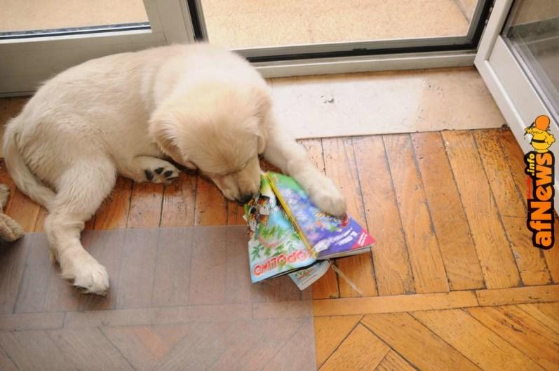 Mmmh! Quanto mi piace Topolino!