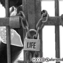 Vite in gabbia