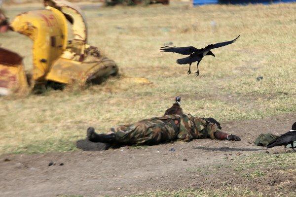 morto con uccello600
