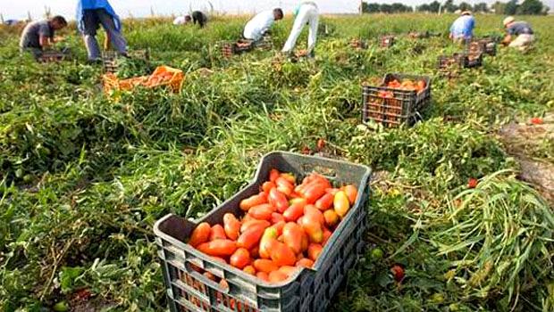 Cassa pomodori