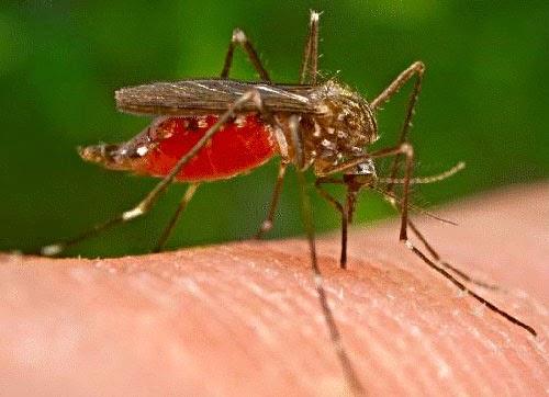 Zanzara sulla pelle 3