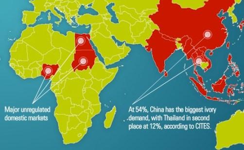 Mercato dell'avorio (fonte IFAW)