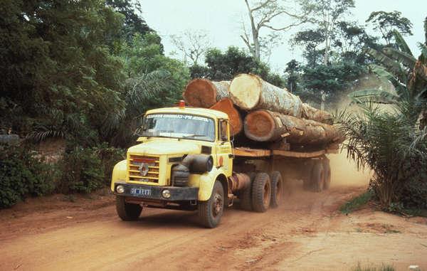 Camion con tronchi di legno pregiato – Foto © Margaret Wilson/Survival