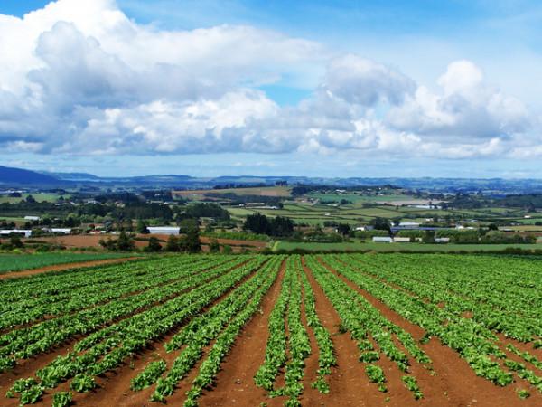 Uno dei progetti agricoli in Marocco
