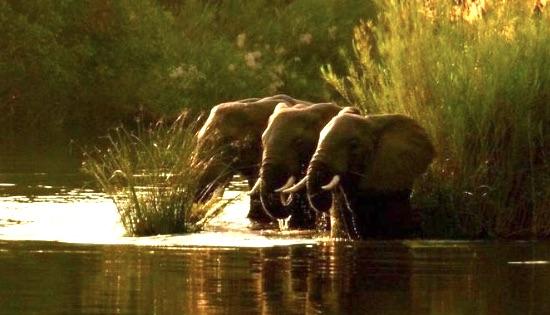 Elefanti del Niassa National Reserve