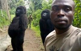Gorilla in posa per un selfie (foto courtesy © Mathieu Shamavu)