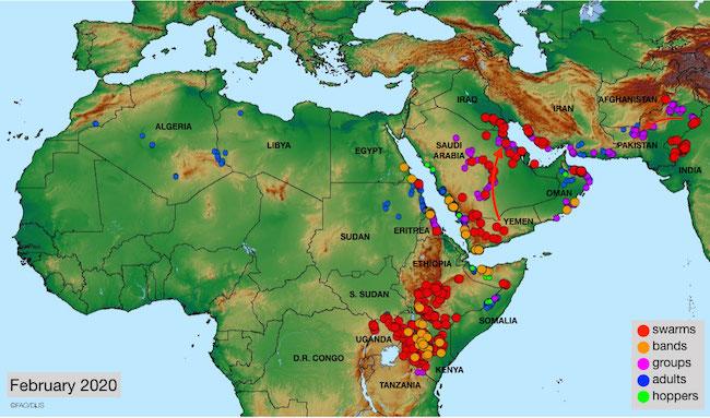Mappa dell'invasione delle locuste aggiornata a febbraio 2020 (Courtesy FAO)