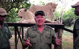 Arthur Mathewson con le sue leonesse bianche (Courtesy www.rhinosaverz.org)