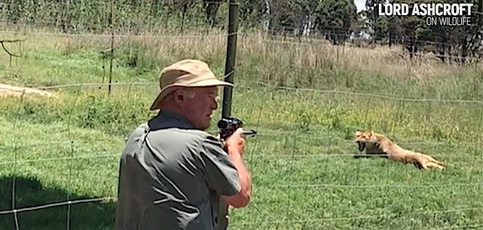 Il momento dell'uccisione a freddo in un allevamento di leoni (Coyrtesy Lord Ashcroft/Lord Ashcroft on Wildlife)