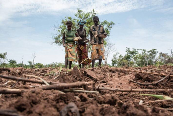 Half of Central African Republic's population in severe food insecurity, UN warns