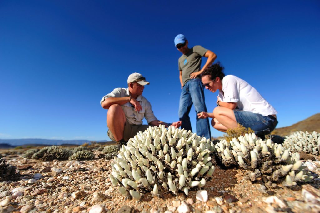 Experience Nature on a Nature Walk in Sanbona Wildlife Reserve