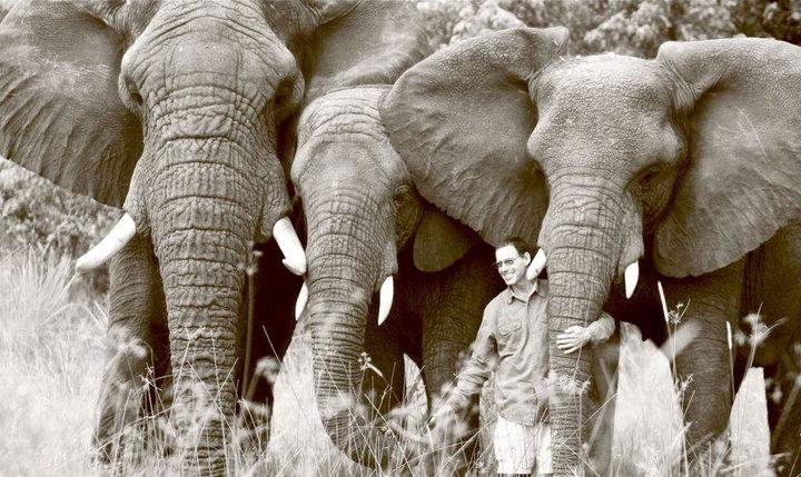 Elephant Rehabilitation in Botswana by Douglas Groves
