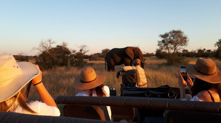 Viewing an Elephant Bull while on a Game Drive