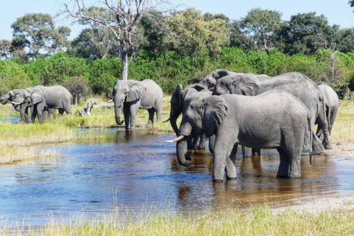 SOUTH AFRICA 3. Okavango Delta