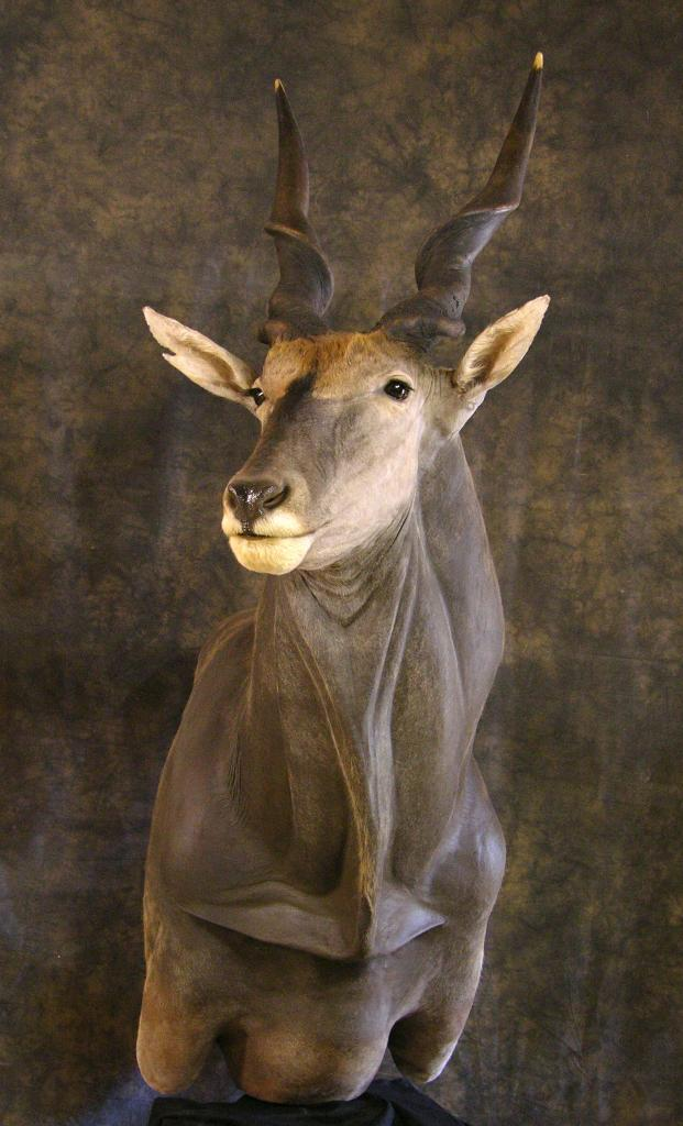 Taxidermy Eland Pedestal Mount Hunting