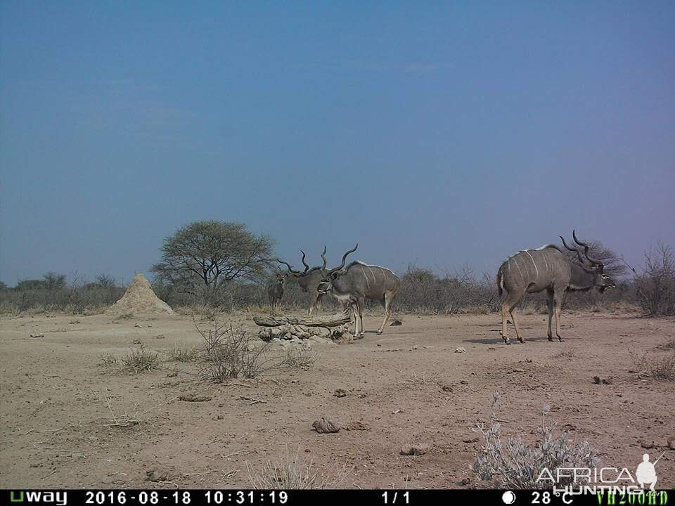 Discover The Wonders Of Hunting In Namibia With Eureka