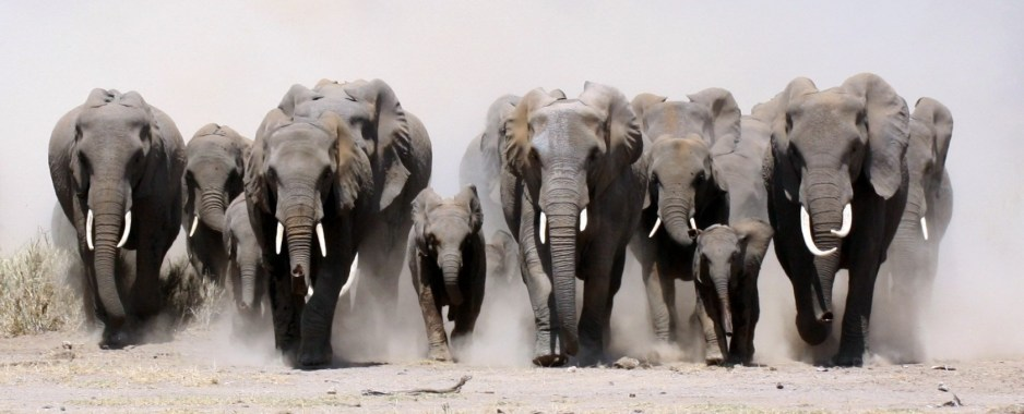Zimbabwe to Donate 2,000 Animals to Limpopo National Park In Mozambique