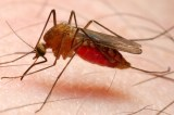 Novartis expands partnership with Medicines for Malaria Venture to develop next-generation antimalarial treatment