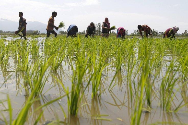 india-farmers-suicide