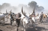 Solar Boreholes, Irrigated Crops Throw Lifeline to Kenyan Herders