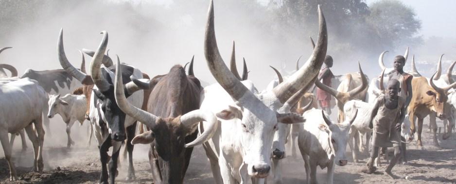 Solar Boreholes, Irrigated Crops Throw Lifeline to Kenyan Herders