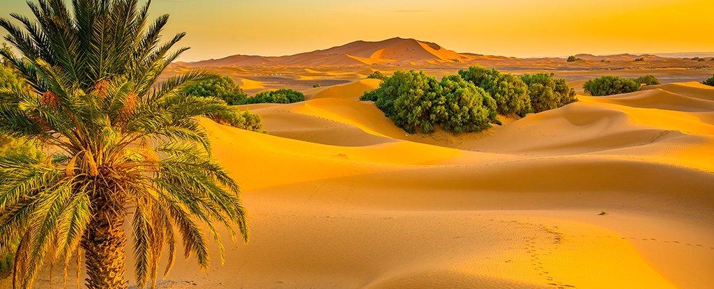 Hơn 3.000 bài thơ tình Phạm Bá Chiểu - Page 21 Desert