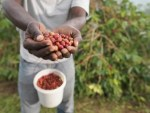 ADVERTORIAL: Linking agricultural sector with key sectors of the Nigerian economy